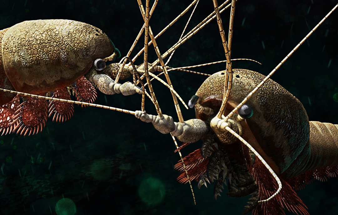 First prize at Il-lustraciencia contest. Alalcomenaeus cambricus. Art by Román García Mora.