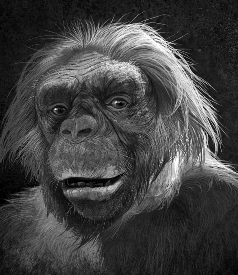 Ardipithecus ramidus, Quo Brain Special Edition. Ardipithecus ramidus. Art by Román García Mora.