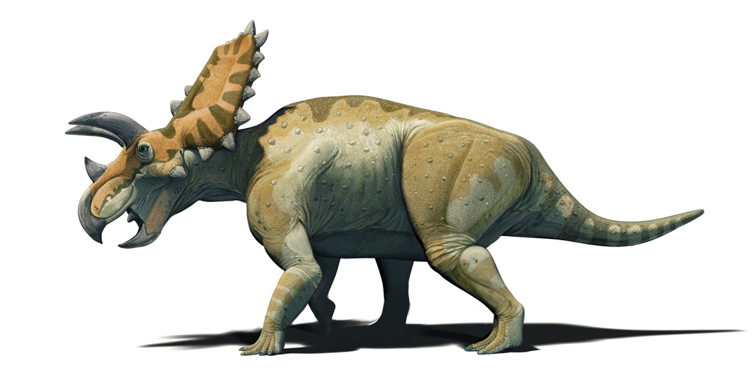 Mexican Dinosaurs, Quo Magazine August 2013. Cohauilaceratops magnacuerna, ceratopsian dinosaur relative to Triceratops, featuring masive brow horns. Art by Román García Mora.