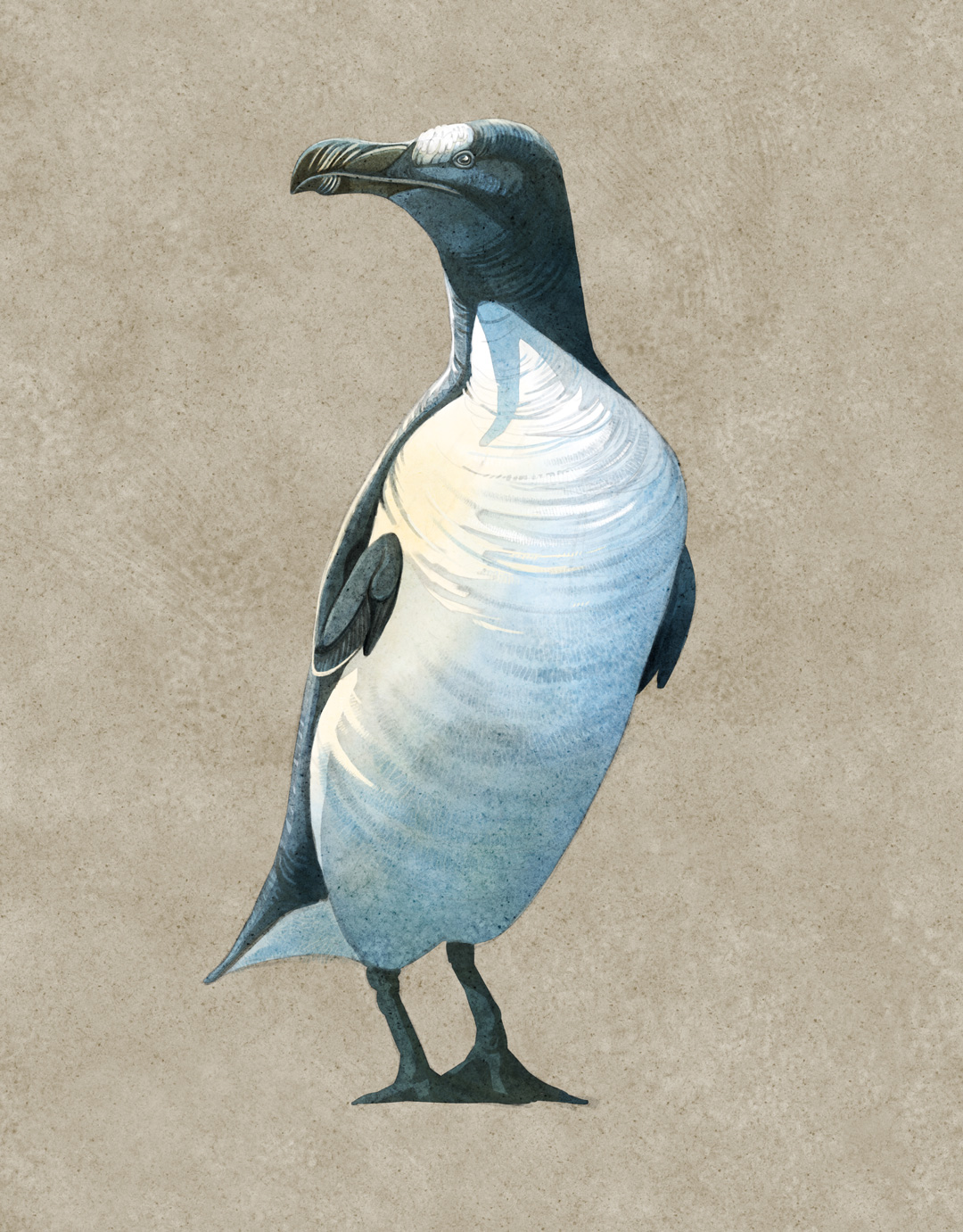 De-Extinction, Quo Magazine June 2014. Great Auk, Pinguinus impennis. Art by Román García Mora.
