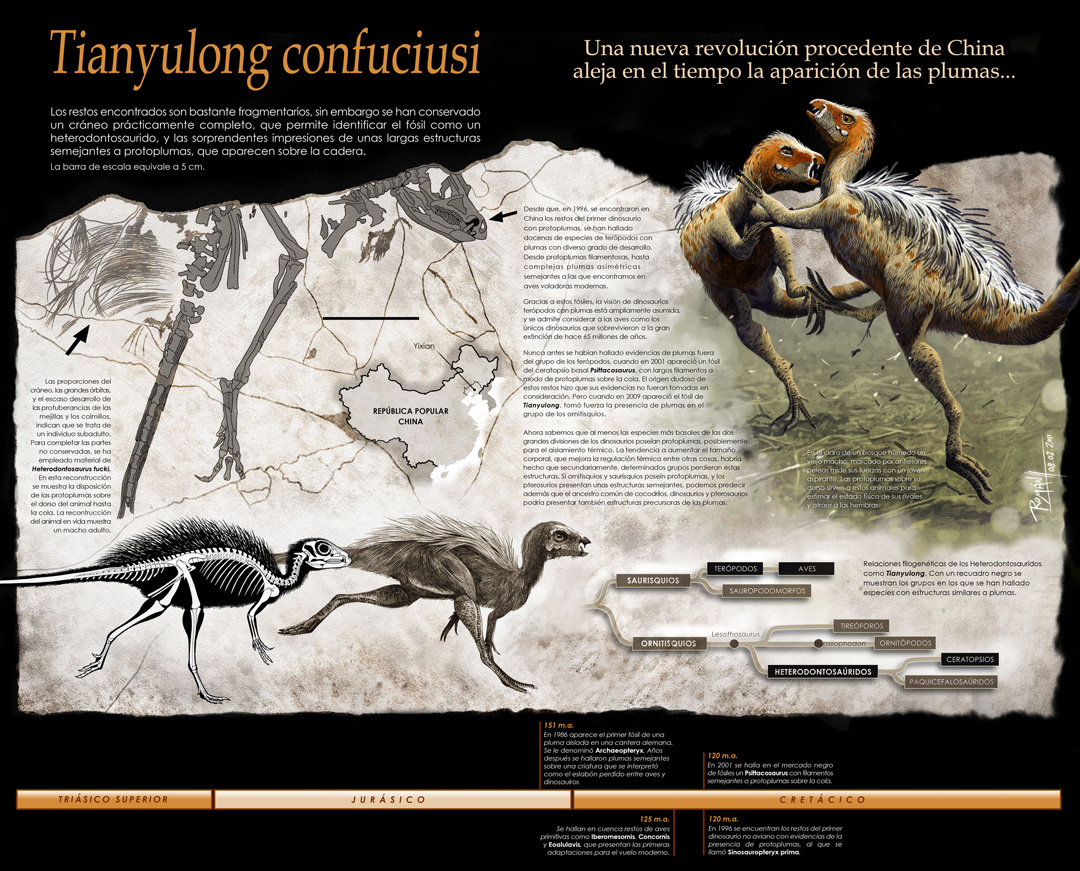 Tianyulong confuciusi infographic. Final composition. Art by Román García Mora.