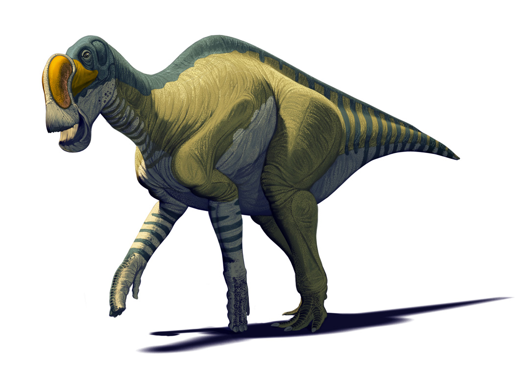 Mexican Dinosaurs, Quo Magazine August 2013. Latirhinus uitslandi, hadrosaurid from the Late Cretaceous of Coahuila province. Art by Román García Mora.