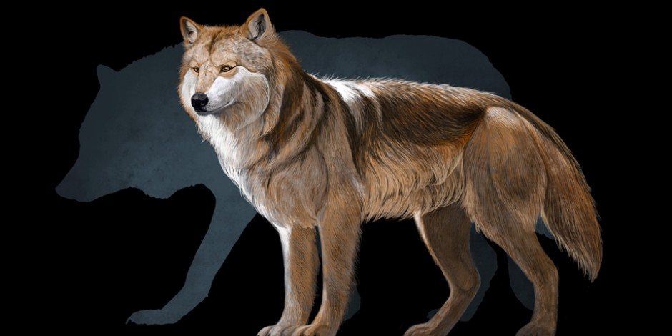 Mexican Wolf, Quo Magazine October 2013. Art By Román García Mora.