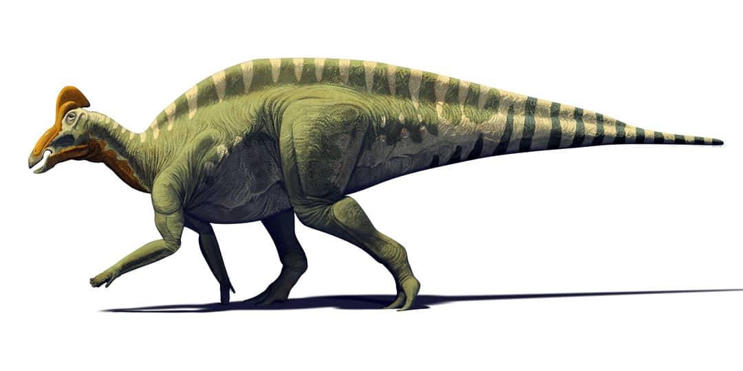 Mexican Dinosaurs, Quo Magazine August 2013. Magnapaulia laticuaudus, lambeosaurine dinosaur from Late Cretaceus of Baja California. Art by Román García Mora.