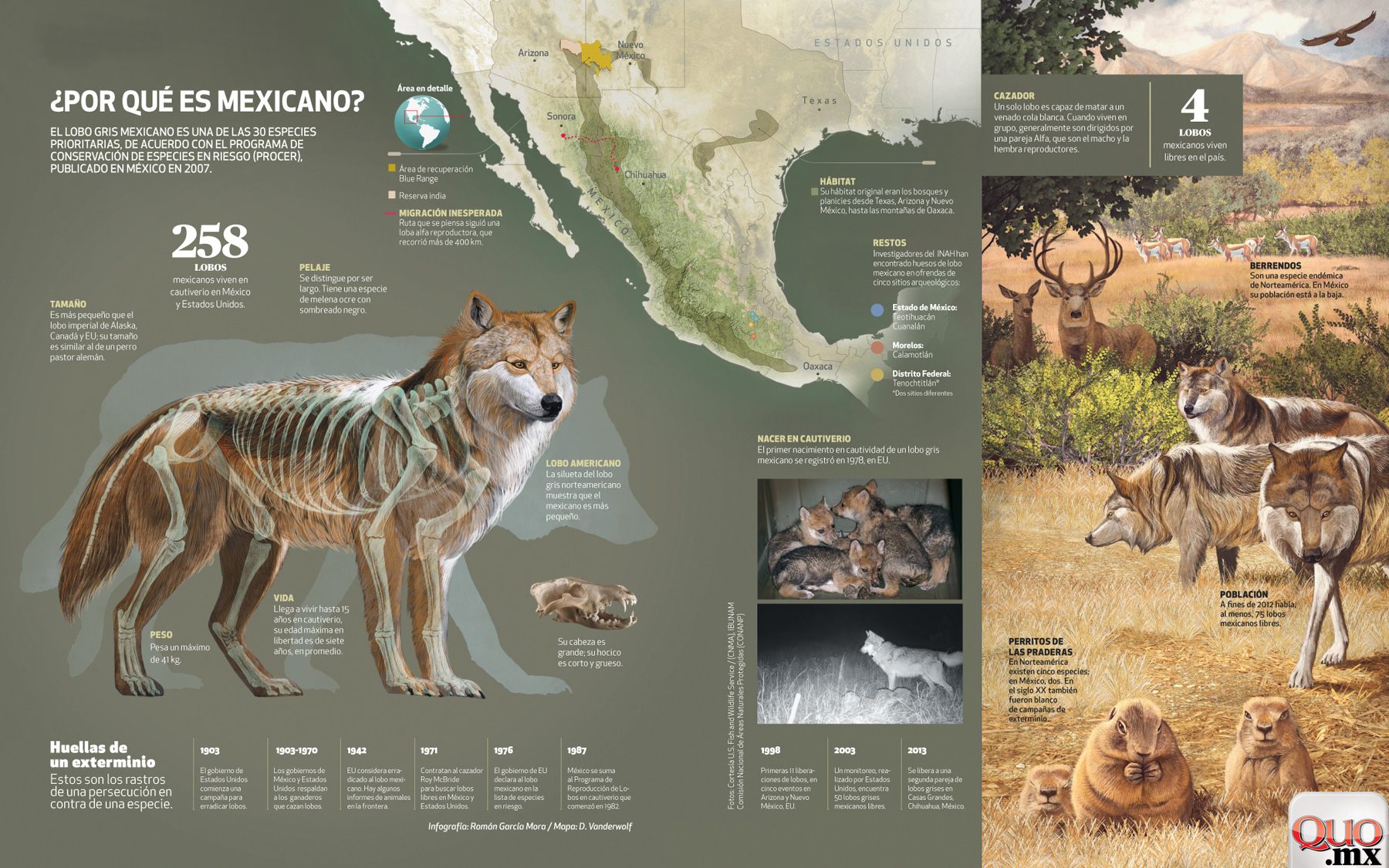Mexican Wolf, Quo Magazine October 2013. Final composition. Art By Román García Mora.