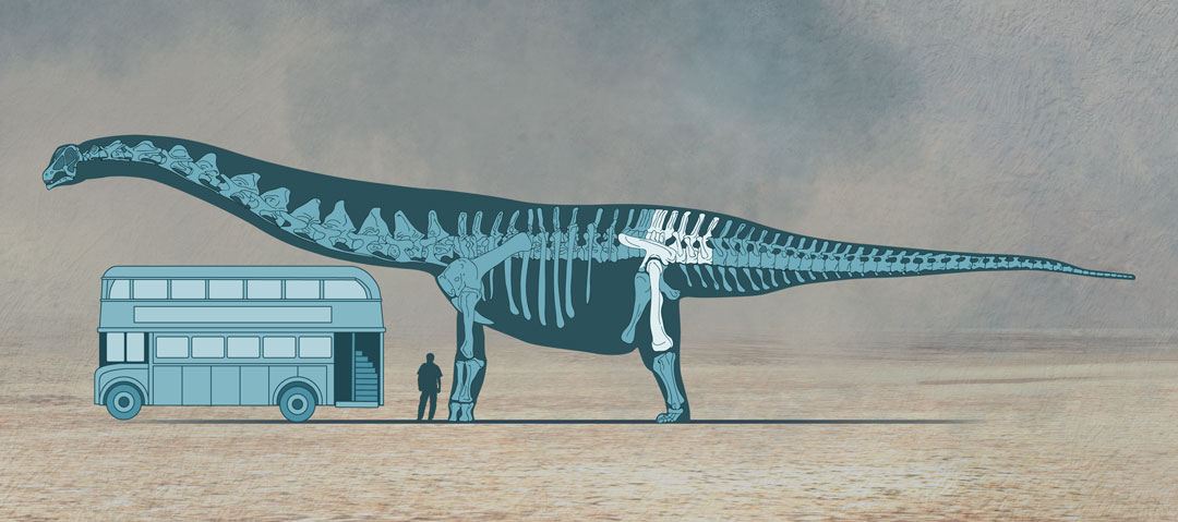 The biggest dinosaurs ever discovered, Quo Magazine November 2014. Skeleton showing recovered remains and scale reference. Art by Román García Mora.
