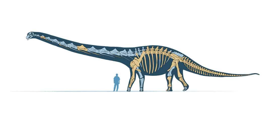 New Stars in the Dinosaur World, PM Magazin April 2015. Dreadnoughtus schrani. Art by Román García Mora.