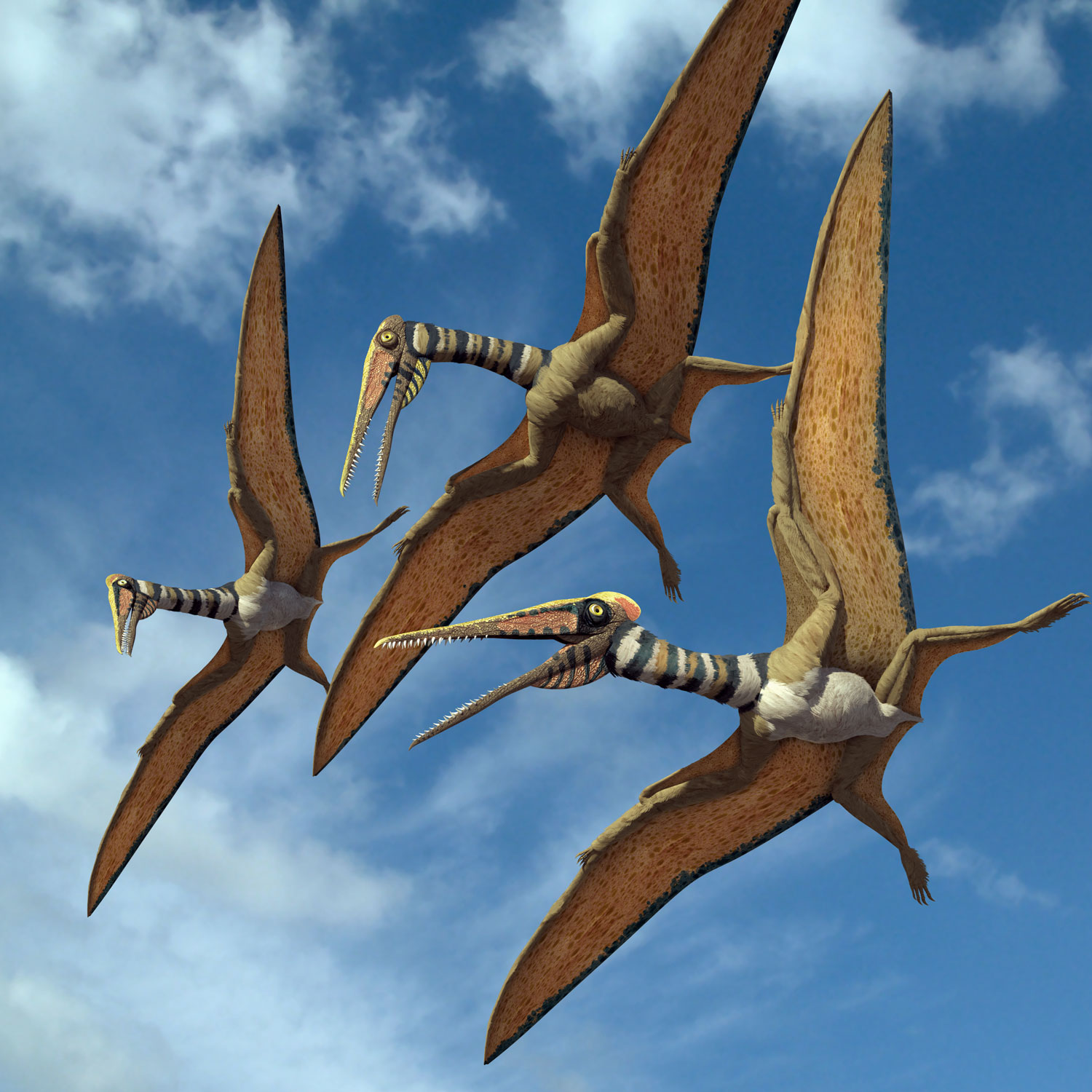 New Stars in the Dinosaur World, PM Magazin April 2015. Kryptodrakon progenitor. Art by Román García Mora.