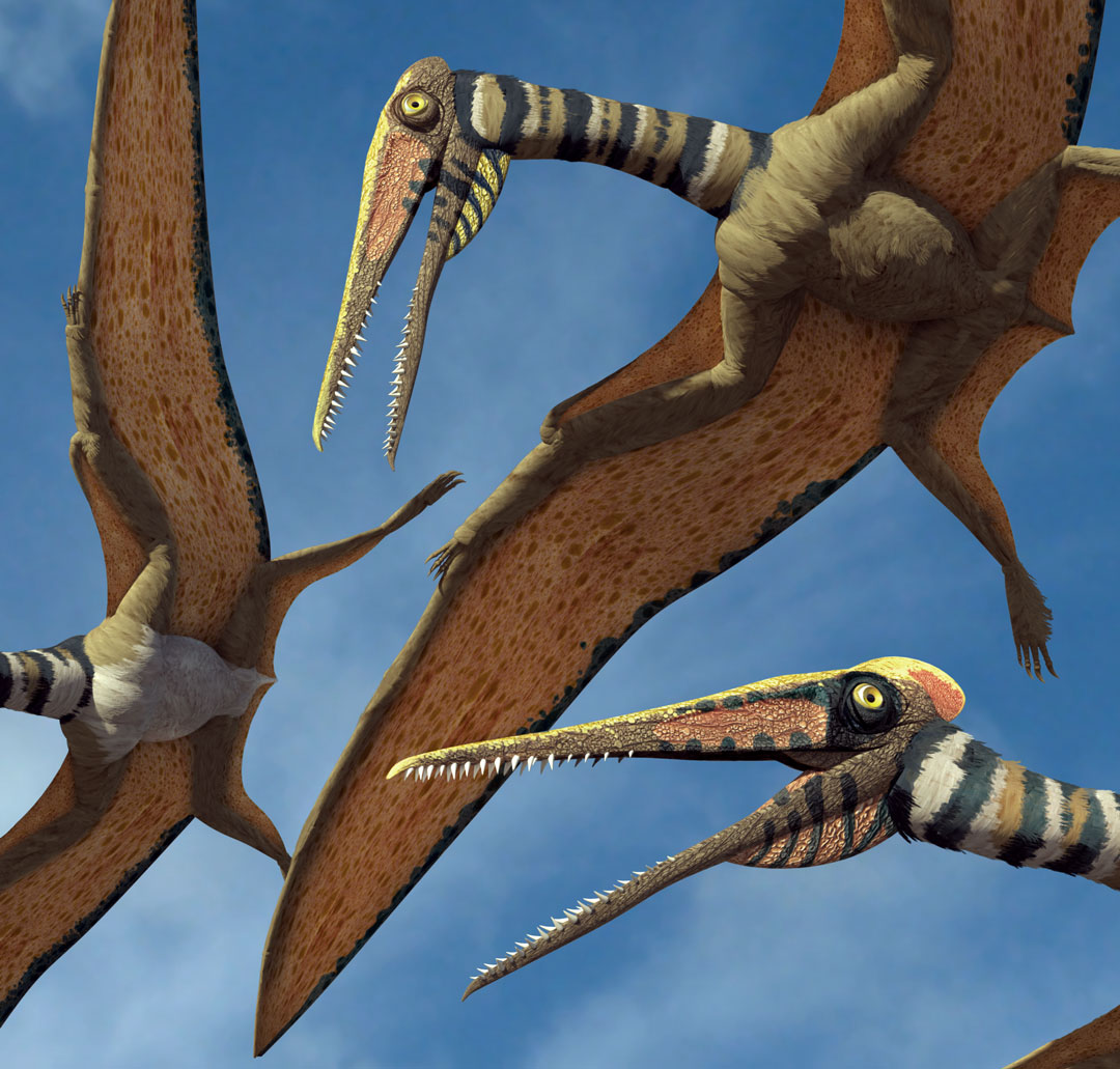 New Stars in the Dinosaur World, PM Magazin April 2015. Kryptodrakon progenitor, detail. Art by Román García Mora.