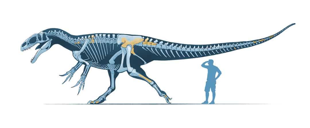 New Stars in the Dinosaur World, PM Magazin April 2015. Siats meekerorum. Art by Román García Mora.