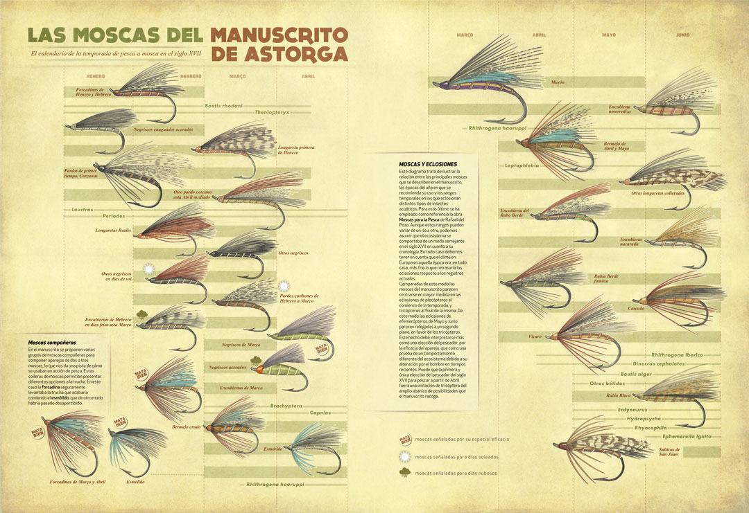 Fly Fishing Projects. Infographic showing the major hatches during the season compared with the flies of the Manuscrito de Astorga. Art by Román García Mora.