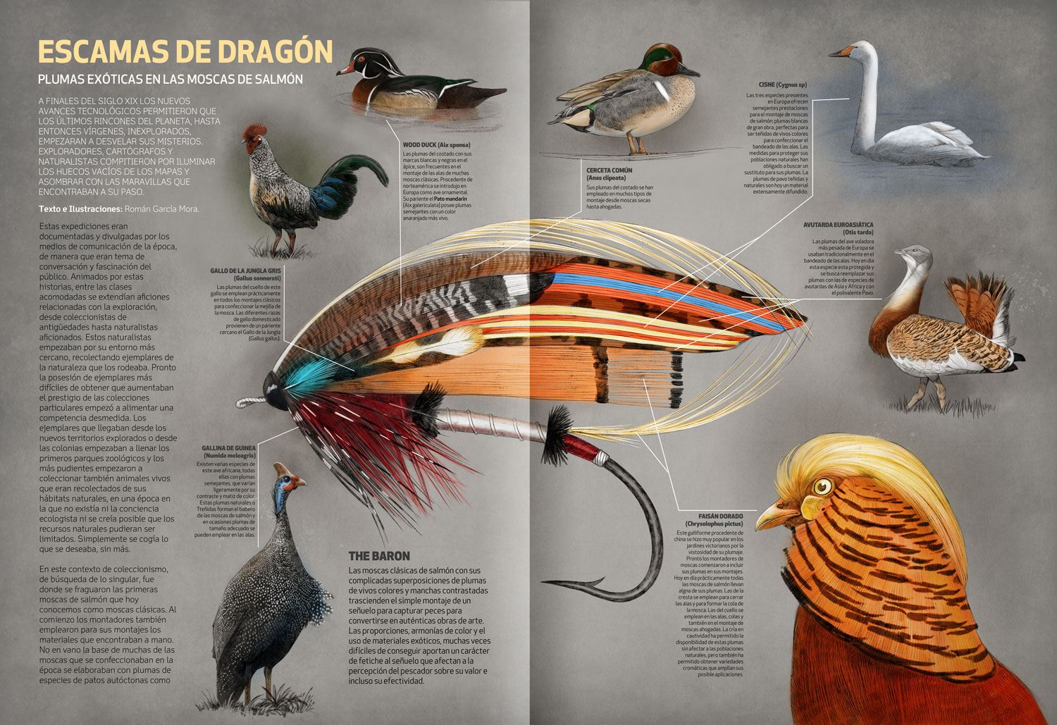 Fly Fishing Projects. Feathers for Salmon Fly Tying. Familiar species. Art by Román García Mora.