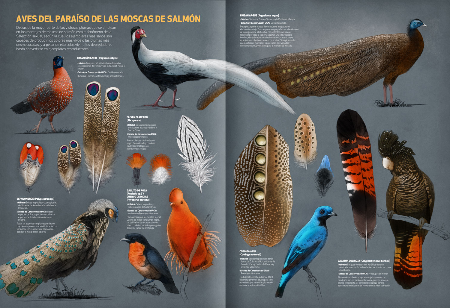 Fly Fishing Projects.Feathers for Salmon Fly Tying. Exotic species. Art by Román García Mora.