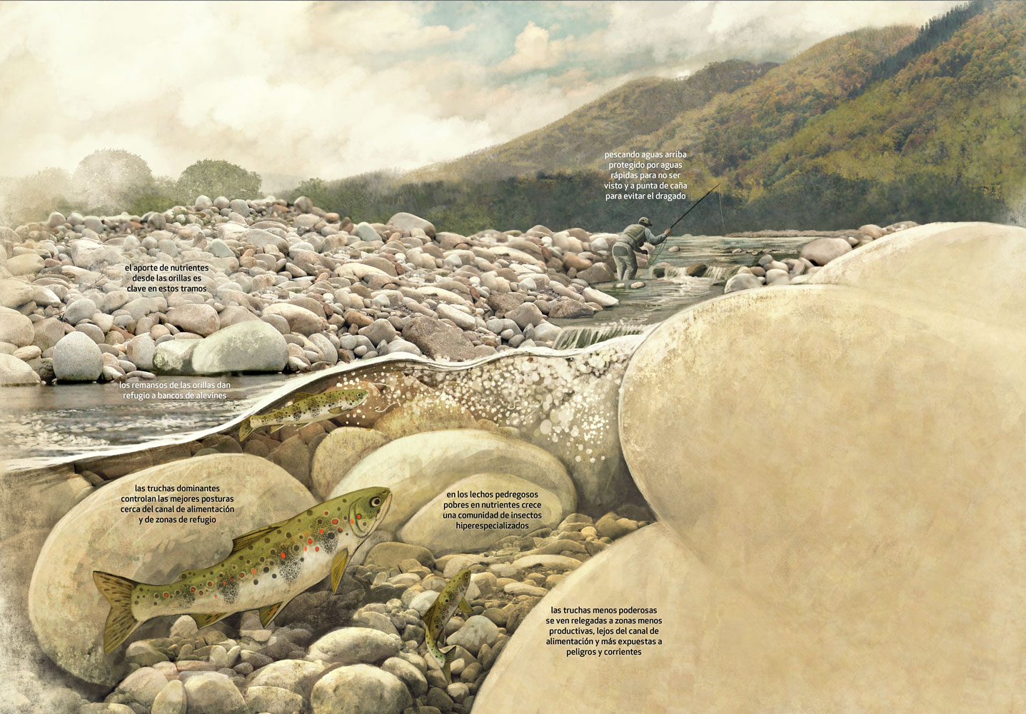 Fly Fishing Projects. Spanish mountain stream structure. Art by Román García Mora.