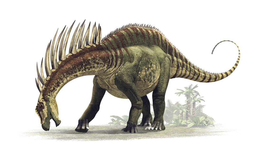 Dinosaur colection, National Geographic Kids. Amargasaurus cazaui. Art by Román García Mora.