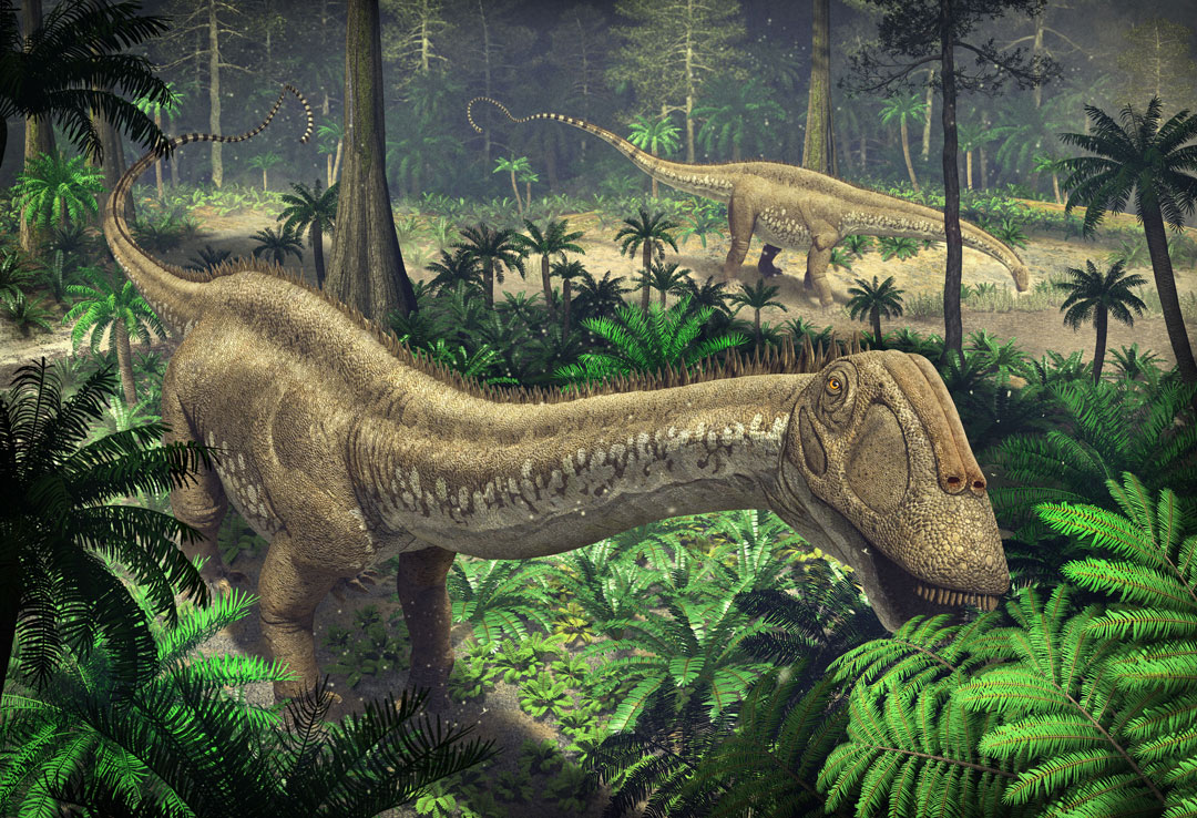 Dinosaur colection, National Geographic Kids. Apatosaurus ajax feeding in the forest glades. Art by Román García Mora.