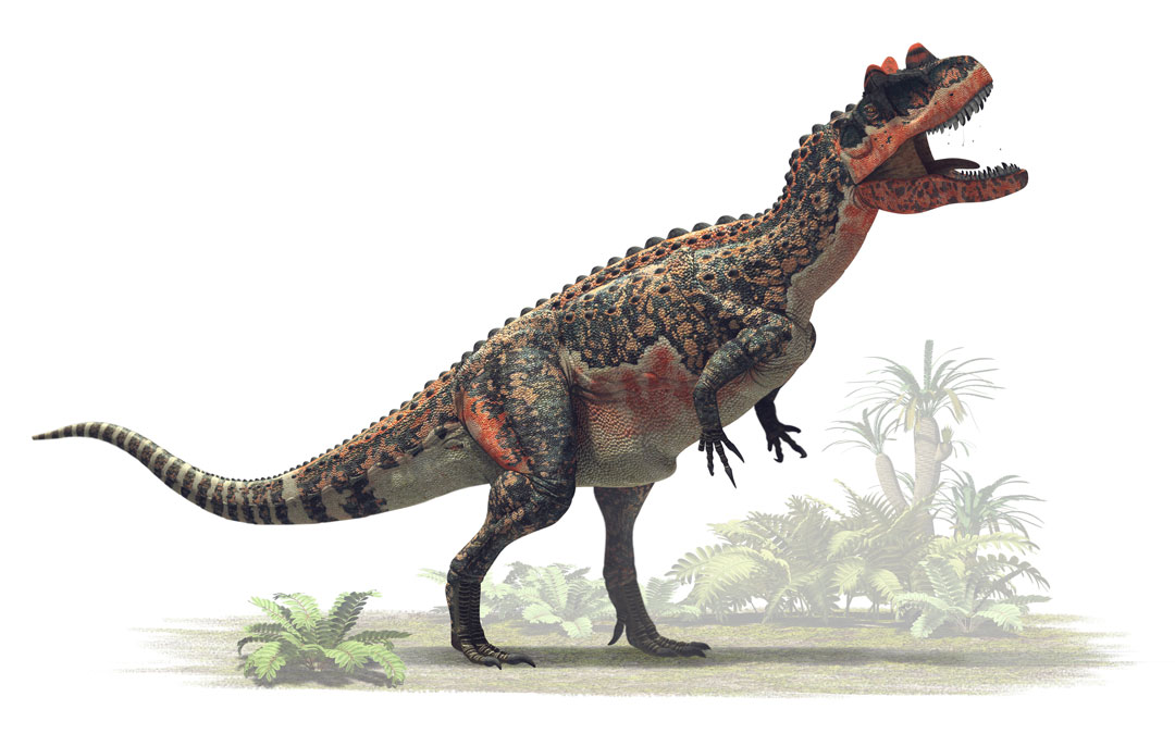 Dinosaur colection, National Geographic Kids. Ceratosaurus nasicornis. Art by Román García Mora.