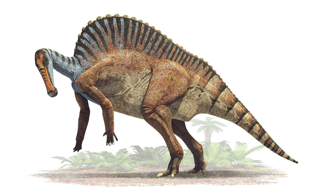 Dinosaur colection, National Geographic Kids. Ouranosaurus nigeriensis. Art by Román García Mora.