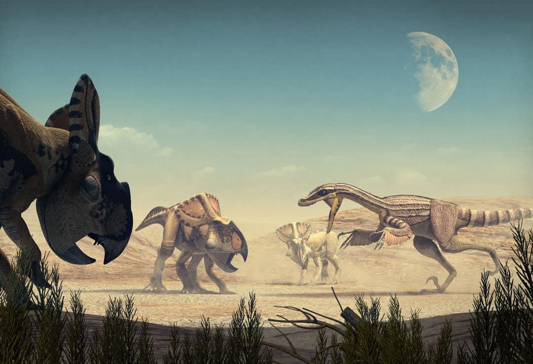 Dinosaur colection, National Geographic Kids. Velociraptor vs Protoceratops. Art by Román García Mora.